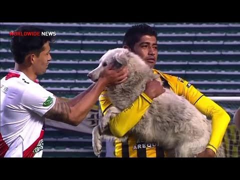 Σκύλος αλώνισε γήπεδο ποδοσφαίρου σε ...θέση επιθετικού