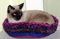 Neko in Kitty Pi bed