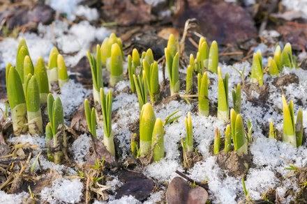 A Seed in Darkest Winter