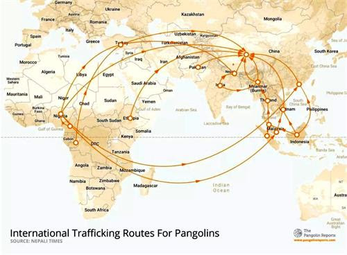 '图:世界穿山甲走私路线图,都卖往中国,中国人当作大补品食用,甲片作为中药材。(网路截图)'
