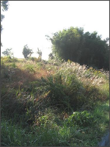 06 susuki wilderness END