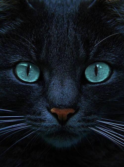 """""""Al caer la noche, todos los gatos son pardos"""".  - Benjamin Franklin"""