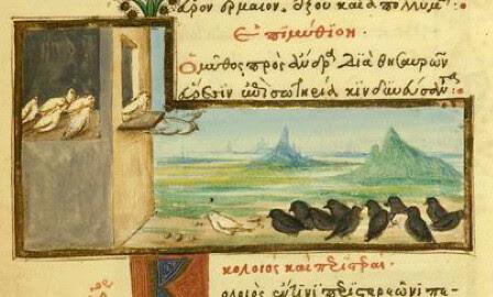 Graculus et Columbae