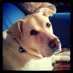Mr Handsome #dogs #happydog #dogsofinstagram #dogstagram #love #mutt #rescue #instadog #petstagram #bigdog