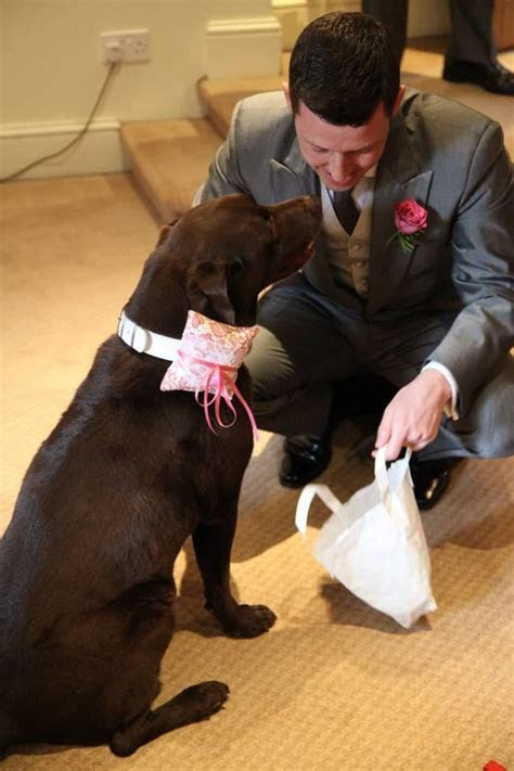 Cadbury the chocolate labrador was ring bearer at his