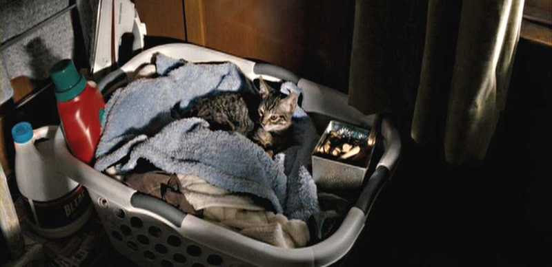 Drag Me to Hell Kitty Doing Laundry