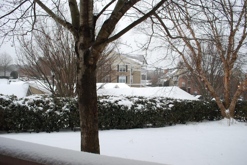 snowday 004