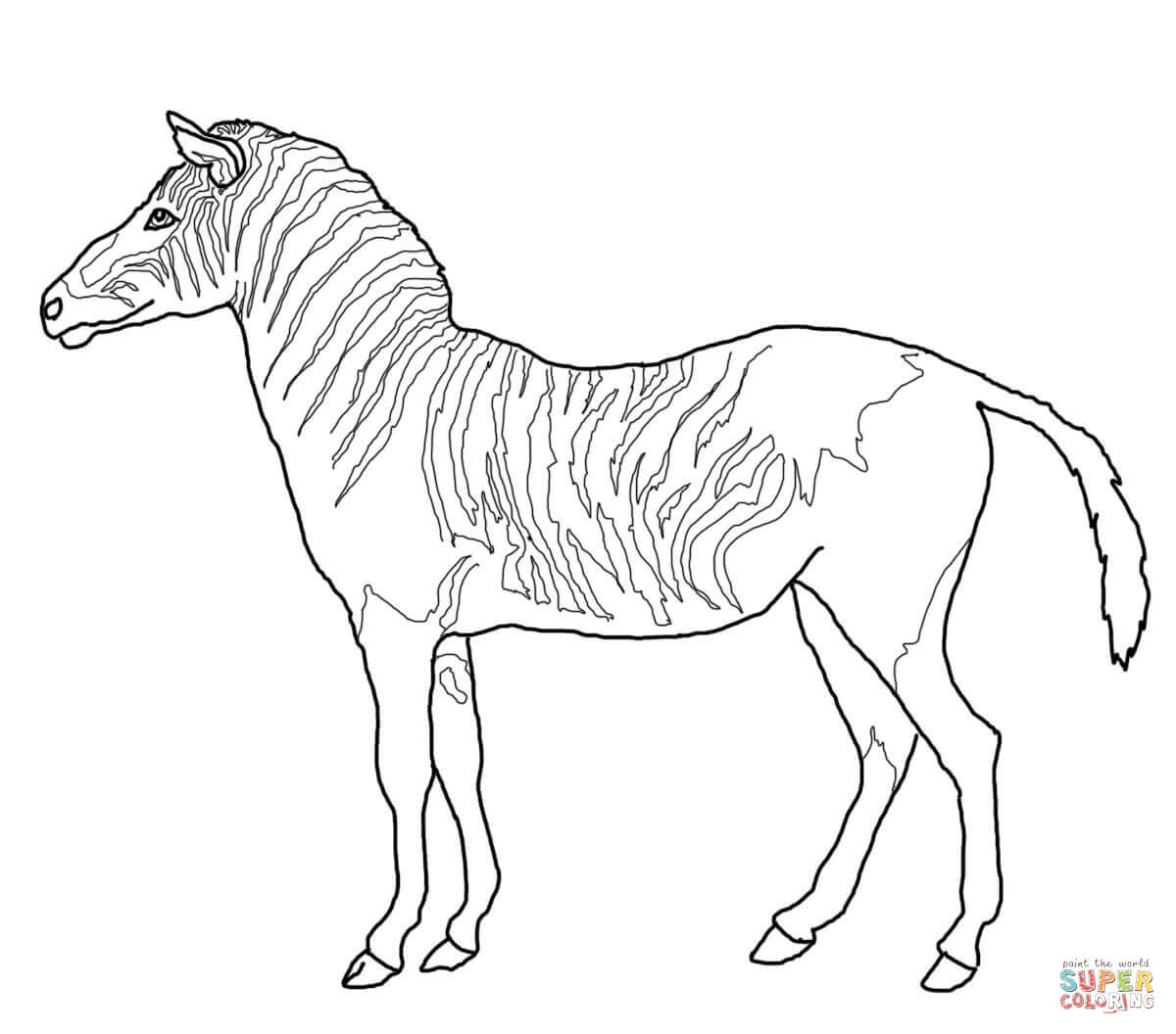 Zebra Drawing Easy at GetDrawings | Free download