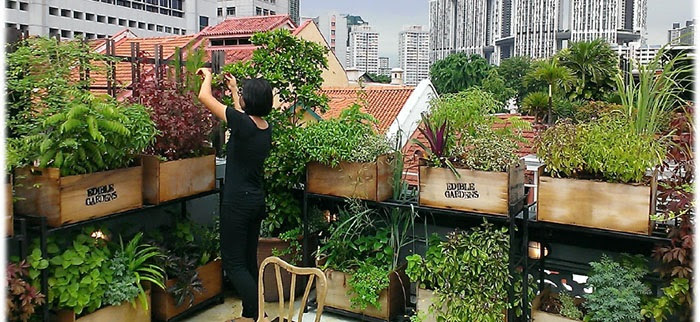 1 Edible Roof Garden