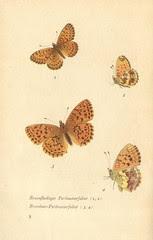 papillons d 4