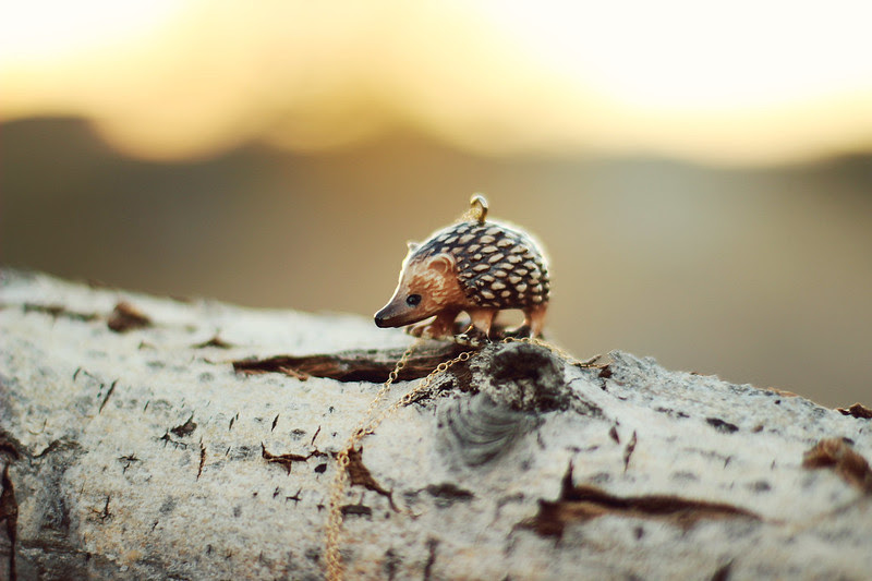 Hedgehog 021