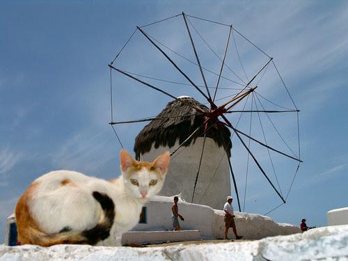 Windmill Cat