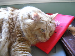 Jasper napping on the Target bag