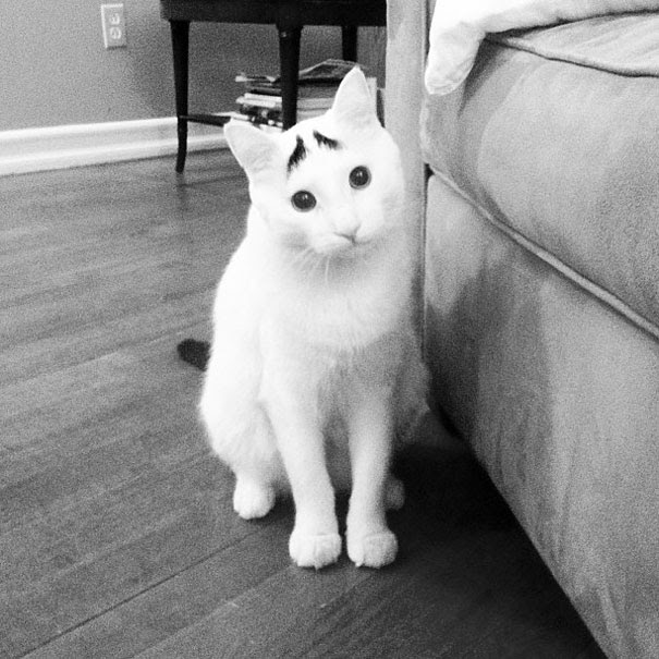 Sam The Cat Has Eyebrows