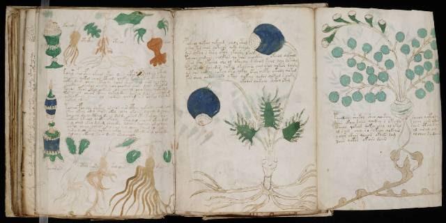 Voynich Manuscript 164
