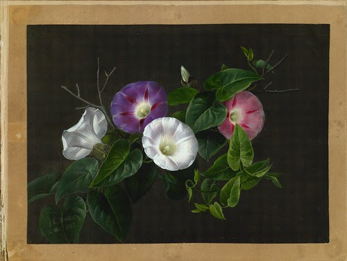 watercolour picture of flowers
