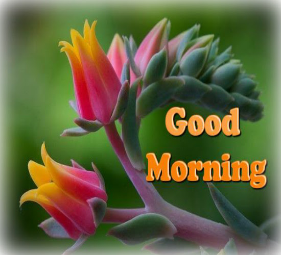 Hope You Have A Sweet Morning Free Good Morning Ecards Greeting