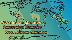 Sirenian Populations Around World