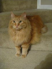 Jasper sitting/standing on the steps