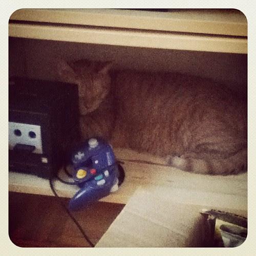 Seymore's found a new sleeping spot. #nintendo #gingerkitty