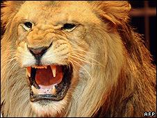 Leão (Foto: Arquivo)