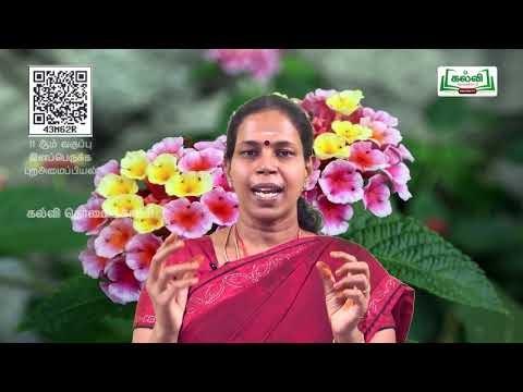 11th Bio Botany இனப்பெருக்க புற அமைப்பியல் அலகு 2 பகுதி 1 Kalvi TV