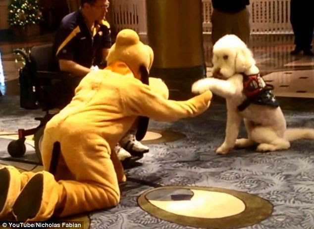 Pleasure to meet you: Bingo extends his hand to shake with Pluto. Mark said his dog believes Pluto is real