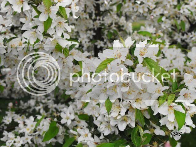 white 09 flowers 2