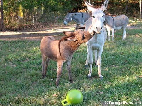 The Daily Donkey 62