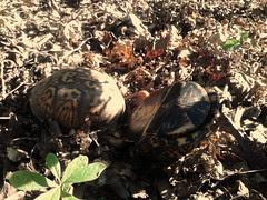turtles by Teckelcar