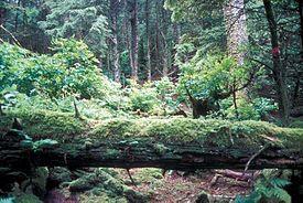 Forrester Island Wilderness in the U.S. state of Alaska