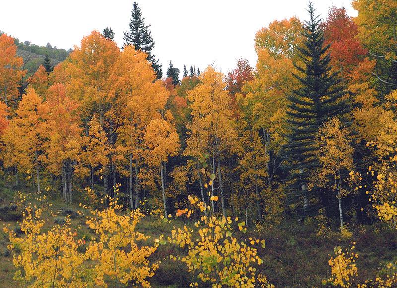 Mill Creek, Gunnison, Colorado