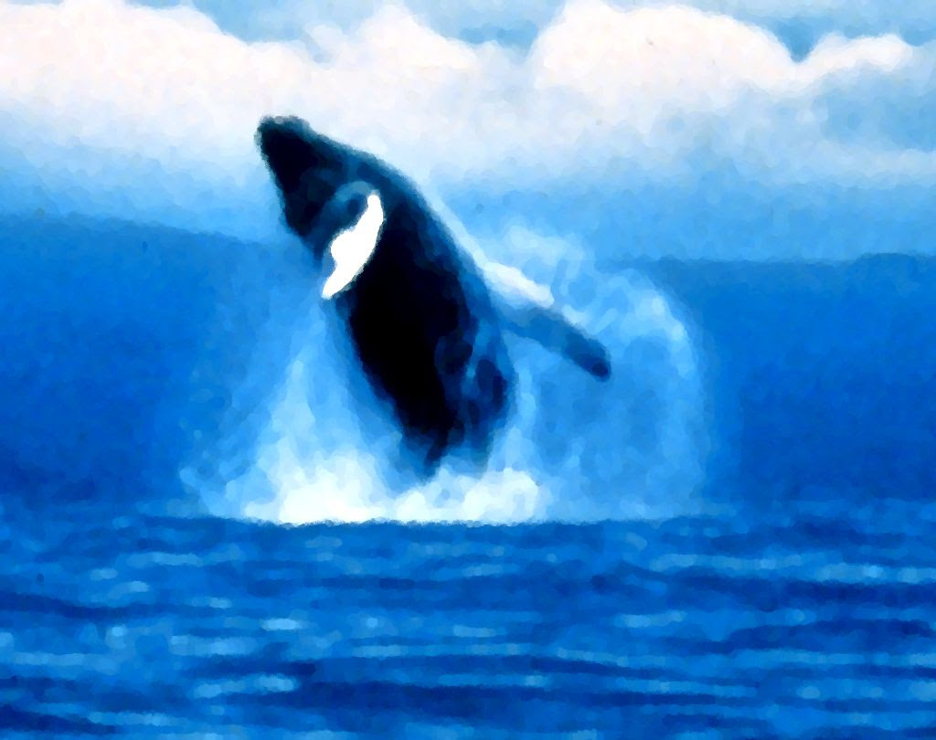 Jumping Orca Painting Background Image, Wallpaper or ...