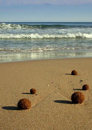 petanca marina