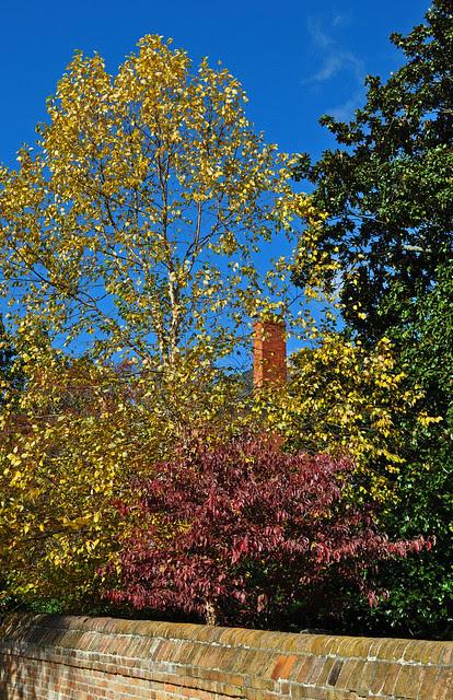 Birch, Dogwood, Bruton's Parrish (2)