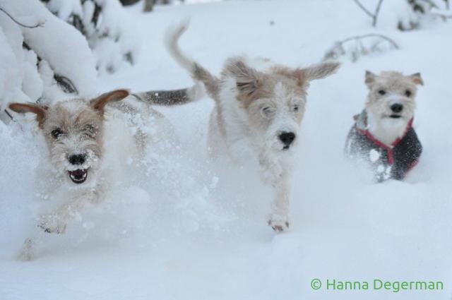 Juoksevat koirat