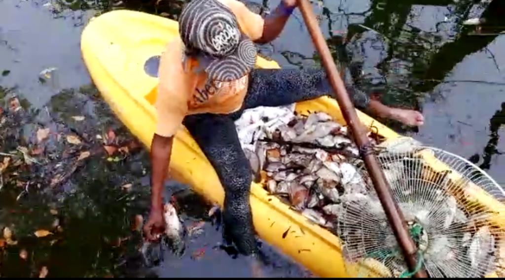 autoridades-del-codopesca-asumen-investigacion-sobre-muerte-de-peces-en-laguna-de-hotel-en-puerto-plata