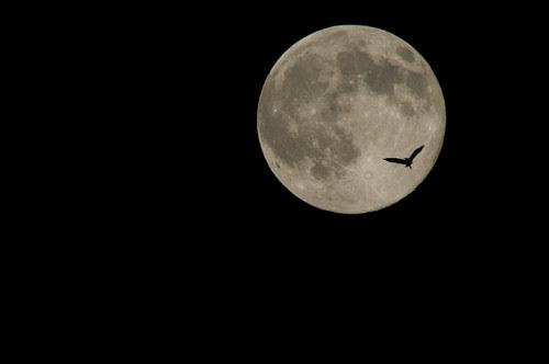 十六夜月( izayoi-moon )とノクターン