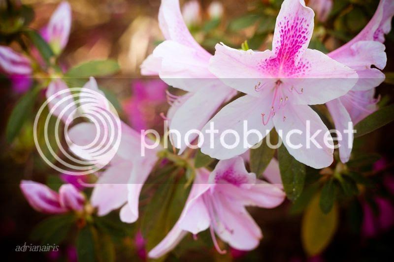 photo pink_zps7ddc5116.jpg