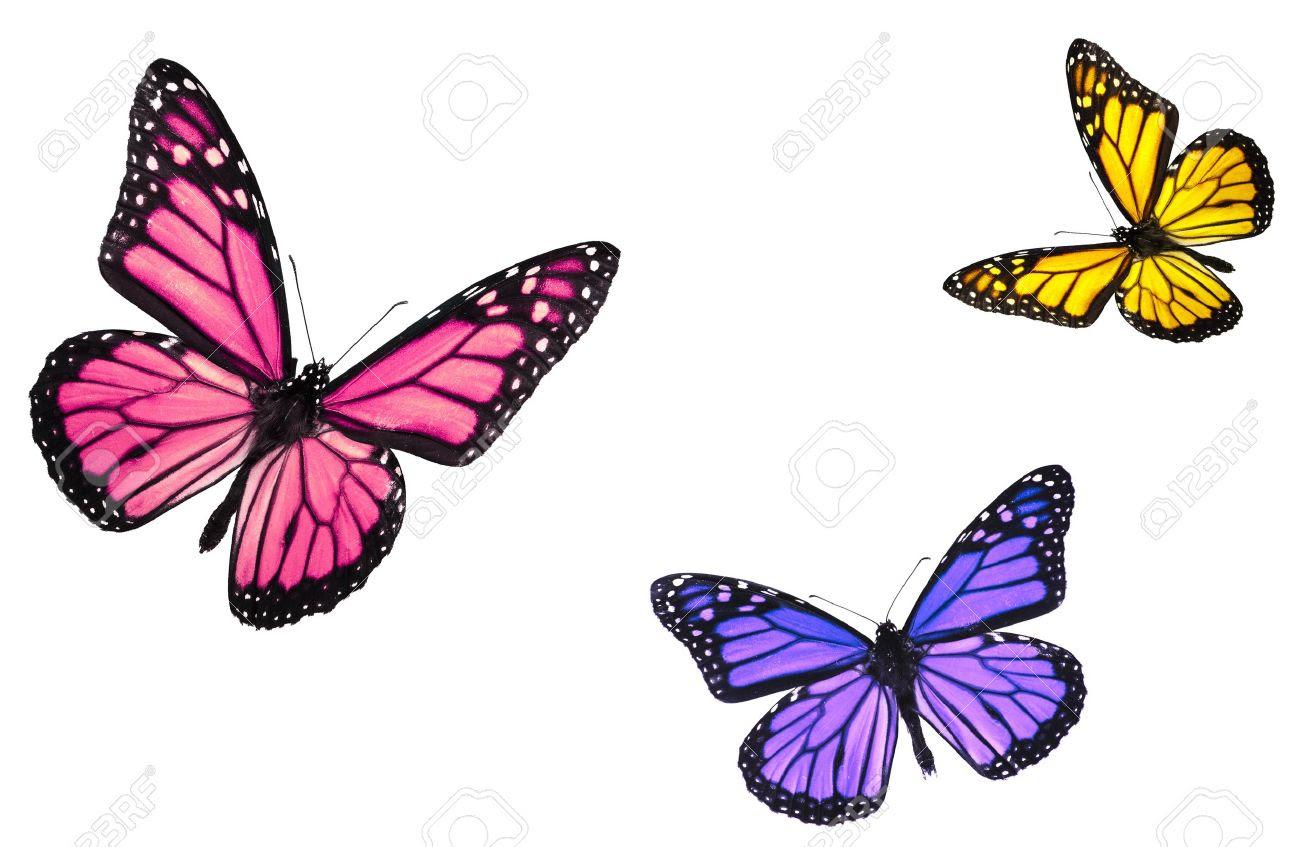 Las Mariposas Las Mariposas