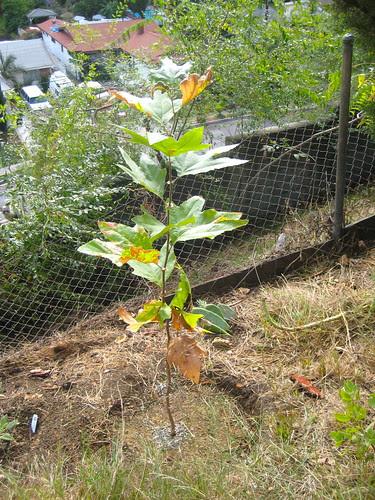 new native plants