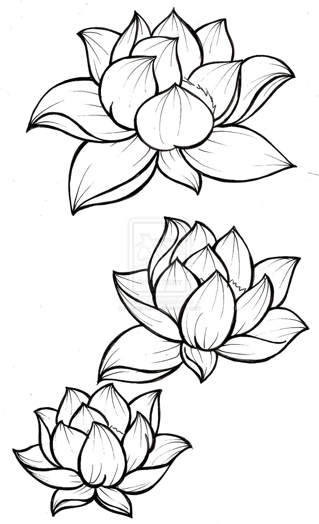 White Lotus Flower Drawing At Getdrawingscom Free For Personal