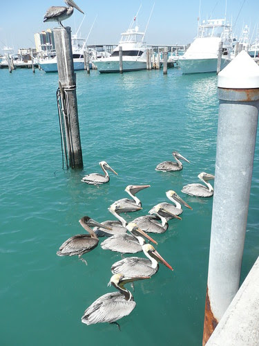 Florida's Sailfish Marina