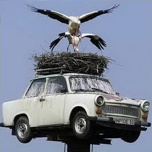 Funny Car Nest