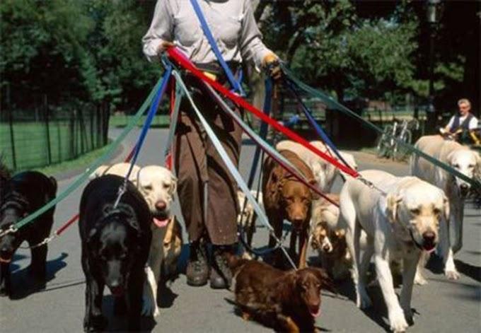 Un extraño le golpea en la cara por no llevar a sus cinco mascotas atadas con correa