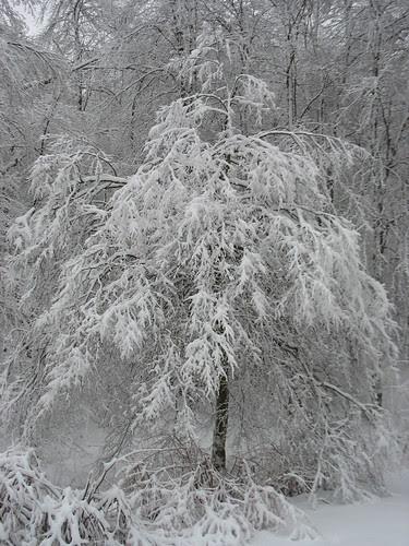 snowy14Jan08-8326