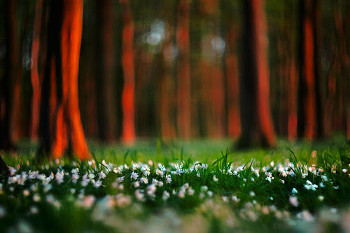 Springtide in the Wood por lichtmaedel