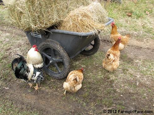 Hay inspectors 8 - FarmgirlFare.com