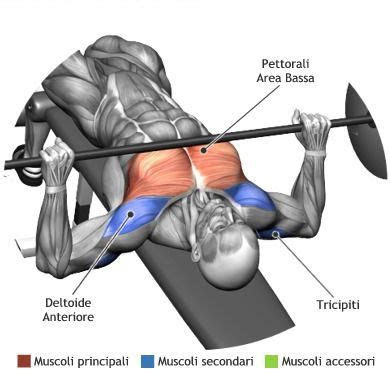 image   bench press works   muscles
