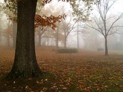 Burns Park in the fog
